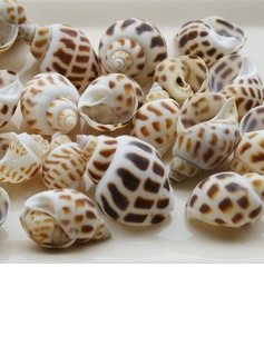 Beach Theme Screw Shells Unique Wedding Décor Set of 4 Packs (40 pieces/Pack)